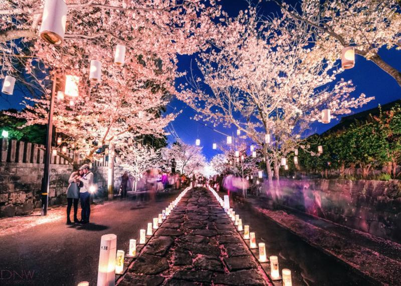 Lễ hội hoa anh đào và đèn lồng suối Yangjaecheon
