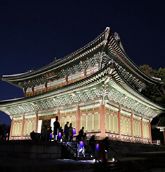 Enjoy this exotic nighttime tour with a guide.