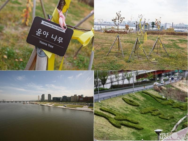 Yeouido Hangang Park (Girls' Generation Forest)_3